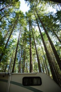 Camping in Vancouver Island, British Columbia: rv camper parked under impressively tall tress, douglas firs, in the camping grounds.